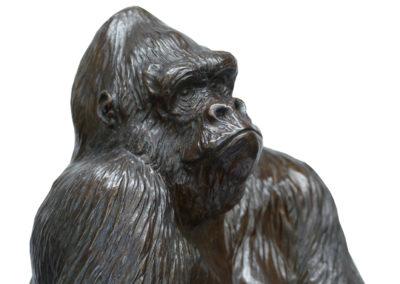 Gorille-Pythagore-vue-01