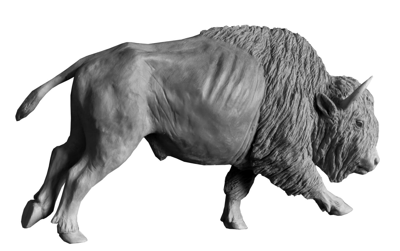 Bronze Colcombet bison d'Amérique mâle