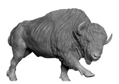 Bison-d'Amérique-grand-mâle-vue-1