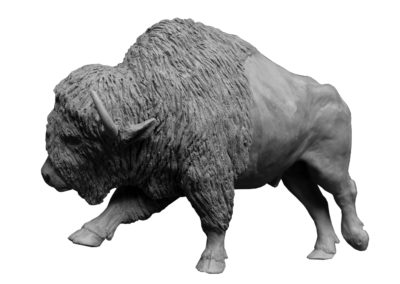 Bison-d'Amérique-grand-mâle-vue-2