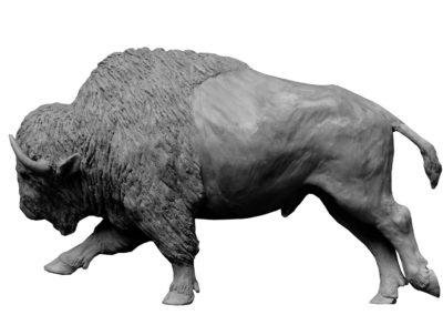 Bison-d'Amérique-grand-mâle-vue-3