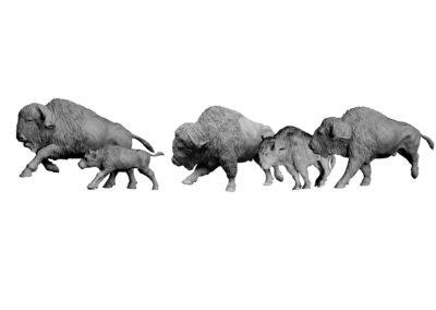 Bisons-d'Amérique-au-galop-vue-03