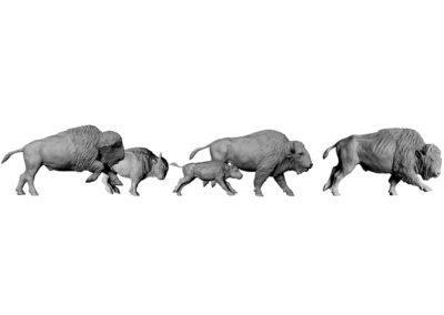 Bisons-d'Amérique-au-galop-vue-04
