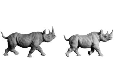 Rhinocéros noirs au trot (Projet)