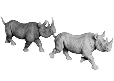 Couple-rhinos-noirs-au-trot-vue-01