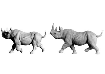 Couple-rhinos-noirs-au-trot-vue-02