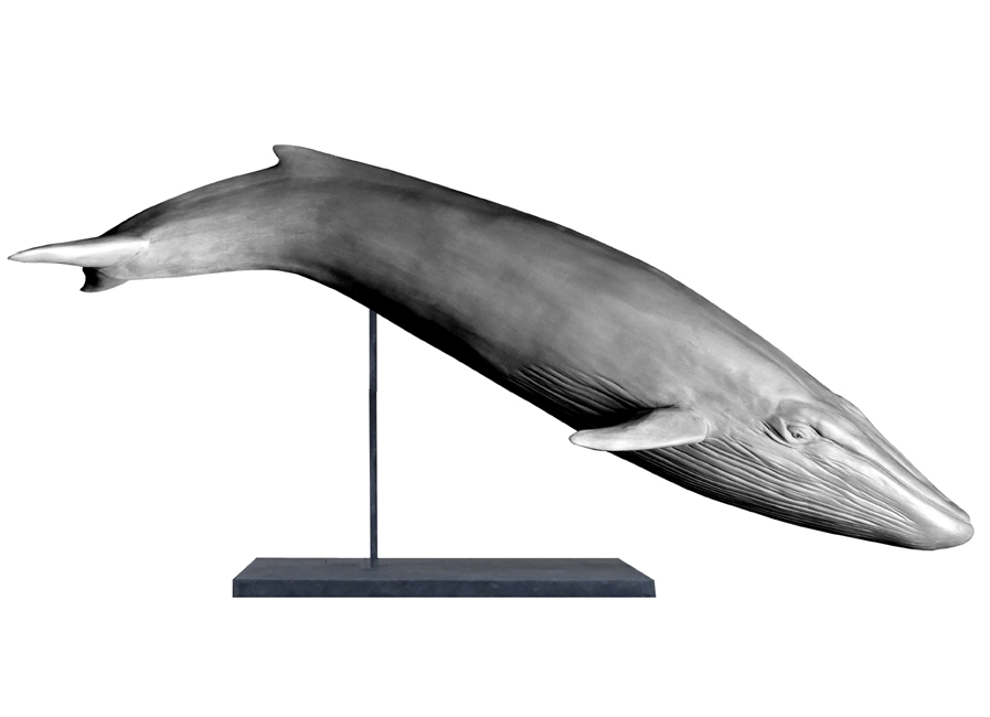 Bronze sculpture Colcombet baleine bleue rorqual