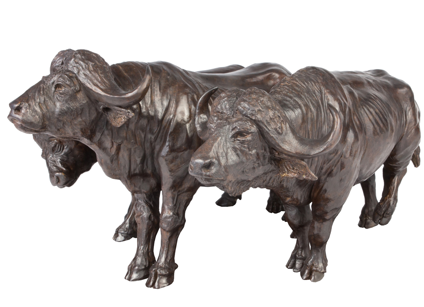 Bronze Colcombet buffles d'Afrique