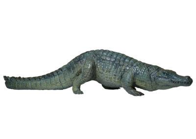 Crocodile-du-Nil-marchant-vue-01