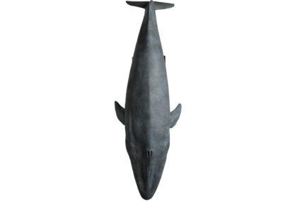 Baleine-bleue-vue-02