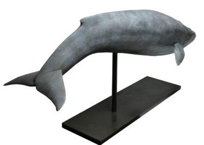 Baleine-bleue-vue-03