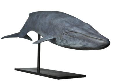 Baleine-bleue-vue-04