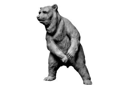Ours-brun-debout-vue-02