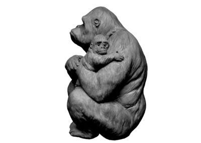 Gorille-femelle-et-son-petit-dans-les-bras-vue-01