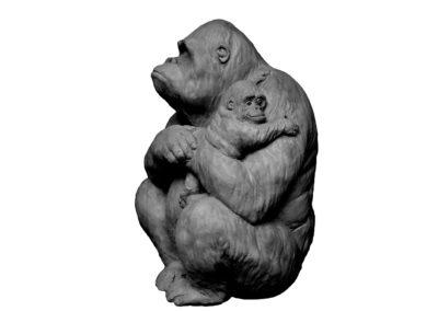 Gorille-femelle-et-son-petit-dans-les-bras-vue-02