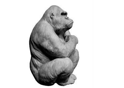 Gorille-femelle-et-son-petit-dans-les-bras-vue-03