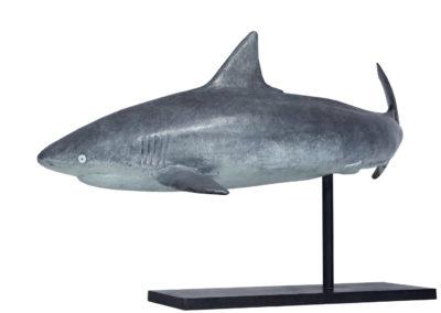 Requin-gris-des-récifs-vue-02
