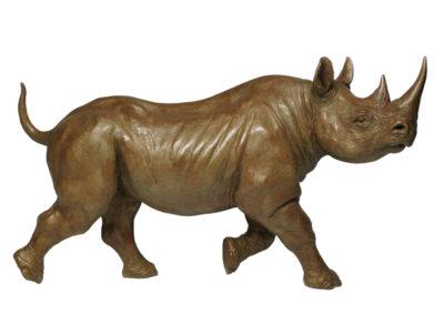 Rhinocéros noir femelle au trot