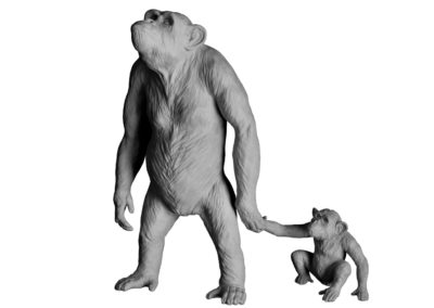 Myrto et Lamproclès, chimpanzés (projet)