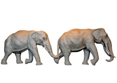 Deux éléphants d'Asie (Projet)