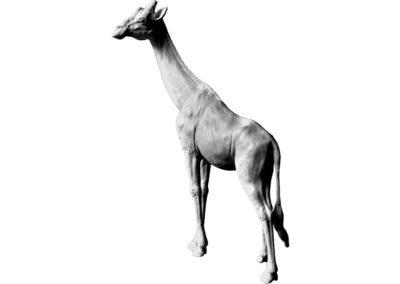 Girafe tête tournée vers la gauche (Projet)