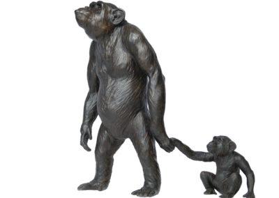Myrto et Lamproclès, chimpanzés